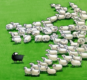 black sheep in the flock